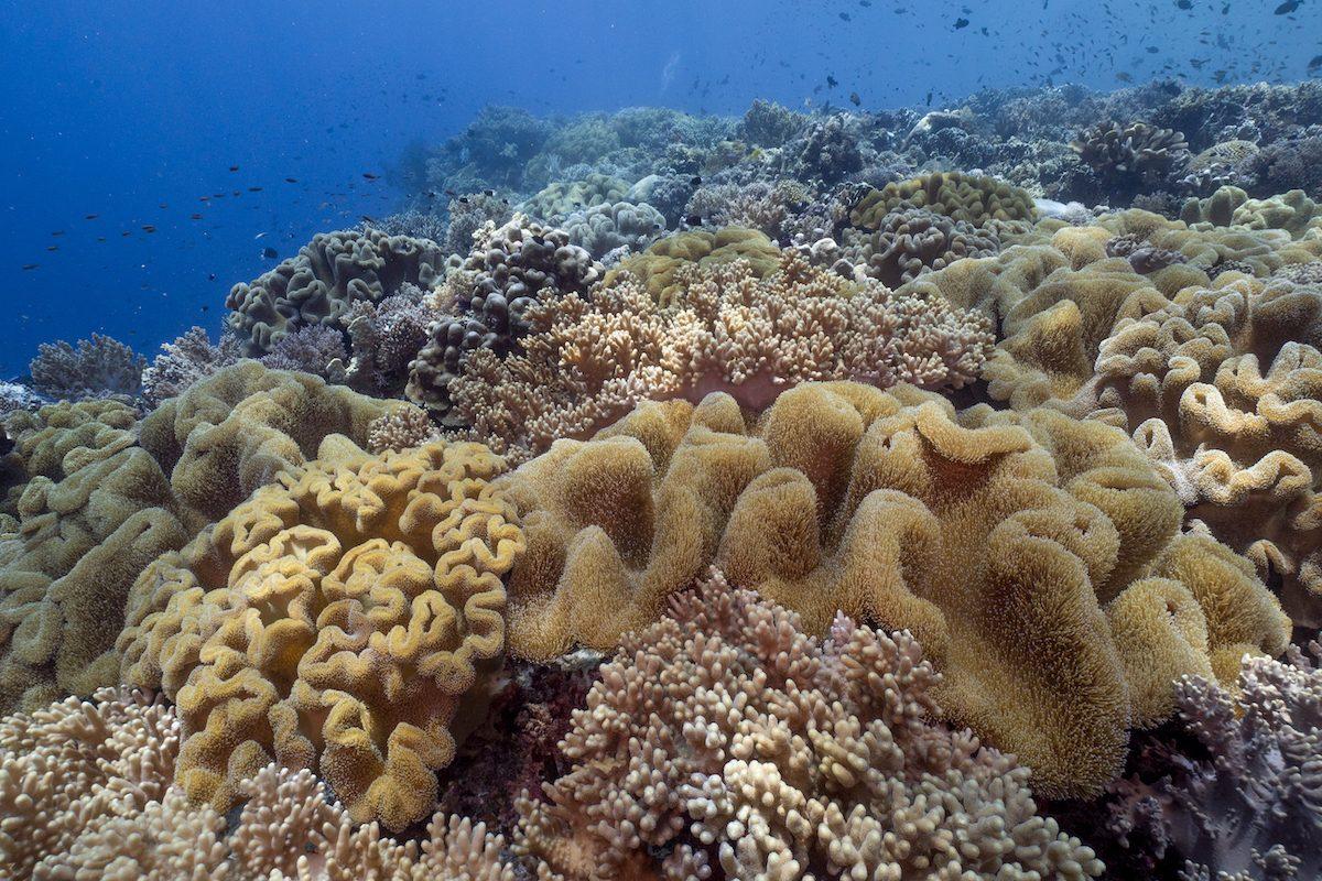 Coral-Reef-Image-Nicole-Helgason copy